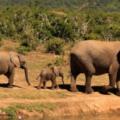 auslandspraktikum-suedafrika-sprachkurs